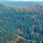 cropped-Visual-no-Markgrafenwald-Perspektive-Katzenbuckel-HAHL1014-B.jpg