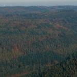 cropped-Visual-no-Markgrafenwald-Perspektive-Katzenbuckel-HAHL10141.jpg