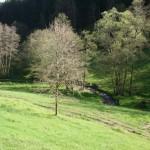 Höllbach Reisenbach 240416 007kl