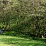 Höllbach Reisenbach 240416 010kl2