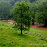Höllbach Hochwasser 28.05.16 HAHL0516 016opt-kl